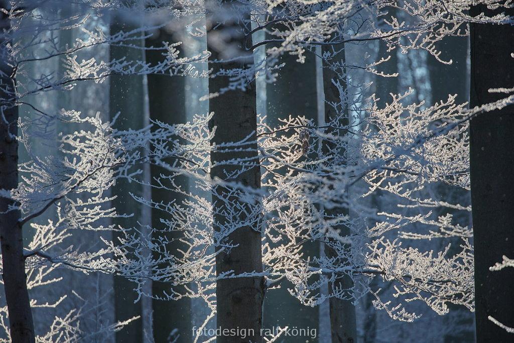 rk-fotodesign-1601-2369.JPG